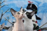 Deux de nos chattes.