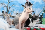Nos trois belles chattes.
