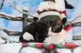 Mousseline aura une portée début janvier 2013.