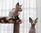 Au printemps elles auront de jolis petits chatons.