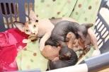 Chatons Sphynx nés le 24 avril